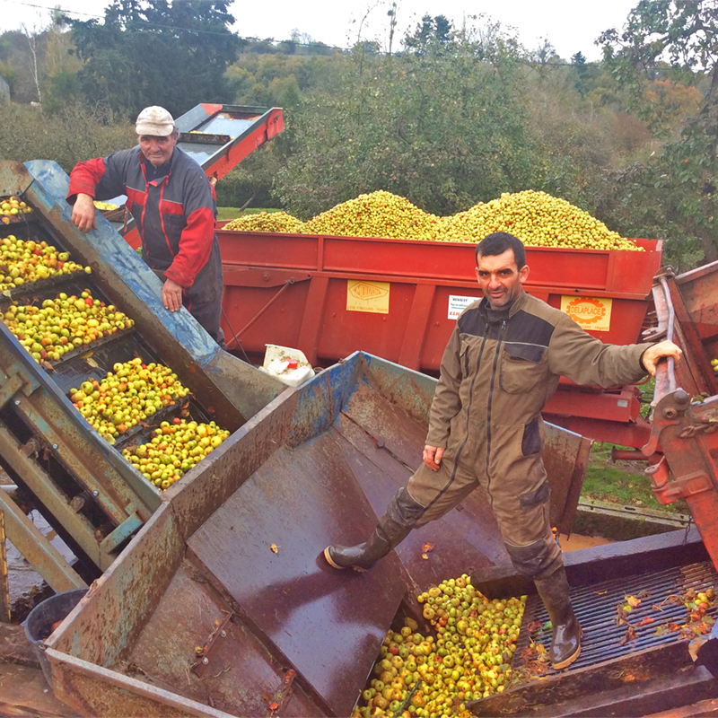 lavage_pommes_famille_tradition normande